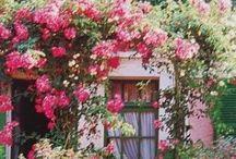 Gardens, flowers & outdoor