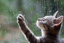Rain - Chuva