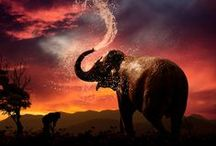 Adorable Elephants / My favorite wild animal! Something about them makes me happy.