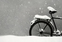 Winter / by Leslie Marinelli The Bearded Iris