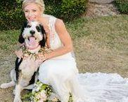Weddings · Pets