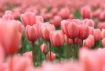 flowers, flowers, flowers...... make me happy