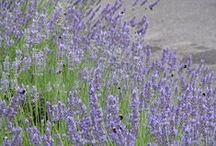 Favorite Herbs / by American College of Healthcare Sciences Accredited Holistic Health Education