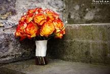 Weddings, Weddings, and More Weddings / by Jenna Wolfe