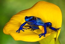 Beautiful Frogs / by Sandy Parker
