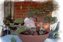 Bonsai & Mini Gardens / . / by Sandy Parker
