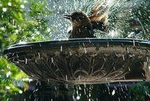 Bird Sanctuary / by Patricia A. Thomas-Smith