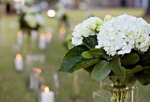 Flowers & Petals & Light (Oh My!) / Gorgeous bouquets, centerpieces, lighting, and more!  / by Jeff Cooper Designs