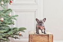 Puppy Love / Want A Frenchie / by Samantha Rickman