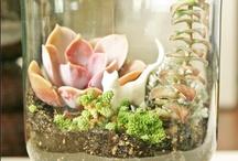 Growing Things / by Gillian Fenske