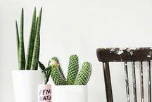 : INDOOR PLANTS :
