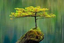 tree hugger, i am / by Kenda-Lee G