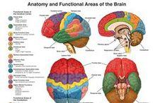 SLP: Use your brain! / by Amanda DeGirolano