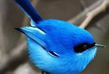 Oiseaux de toutes les couleurs.......