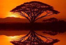 Aventuras en África