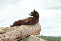 Bears / by Darlene Tully-Curtis