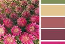 Kleur / Kleurschema's ter inspiratie.