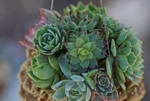 Succulent <3 Moss <3 Fungus NATURE / Moss, Succulents, Ferns & Fungus dash of Ivy with a dab of mushrooms!! / by Debra Kay