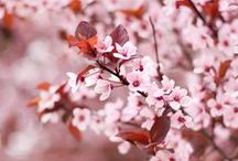 Cherry Blossom / by NAF NAF Paris