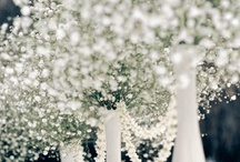 Wedding Ideas / by Maxime P