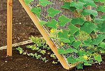 Idées pratiques pour le jardin / Garden ideas / Pleins de bonne idées pour votre potager ou votre jardin. Garden ideas tips / by Sophie Gossart