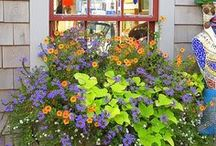 Outside Wonders / Outside inspiration: patio, landscaping, front porch, decor, flower pots / by Melissa 'Smith' Howard