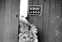 Animal / by LokFu Wong