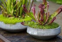 plants&garden&green