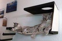 Cat Beds & Enclosures