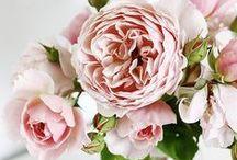 *Flowers Galore*