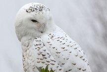 ※OWLS※