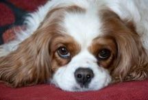 Doggies that melt your heart / by Gail Murdock