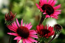 Gardening is my passion / by Gail Murdock