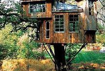 Tree house / Algún día viviré en los árboles.
