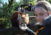 Experiences at Auckland Zoo / Discover Auckland Zoo like you've never seen it before! http://www.aucklandzoo.co.nz/experiences/Pages/experiences.aspx / by Auckland Zoo