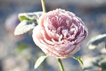 wintermoments