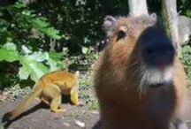 ZooTube / A collection of videos filmed at Auckland Zoo as well as other wildlife, conservation and zoo videos. / by Auckland Zoo