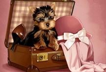 Yorkie Lover / Yorkshire terrier pics