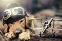 Photography: Pets / Pet photography