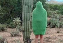 LES CACTUS / by Katie Broderick