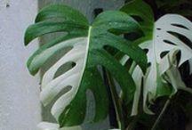 Jardins & Botanique / #garden #plant #botanical