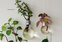 ideas / by Eszter Boros-Rivera