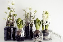 Flowers / Ikebana