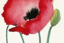 Poppies - papoulas / by Beth Bucker