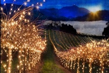 { Wine & Vineyards }