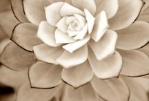 Flora / by Shannon Goodman