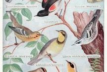 Vintage Illustrations / Botanical Illustrations | Birds Illustrations