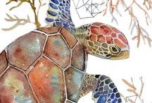 Art - Turtles