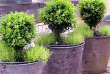 Gardening - planters