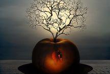 Nature - Apple items